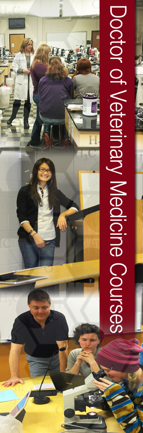 Doctor of Veterinary Medicine Courses banner