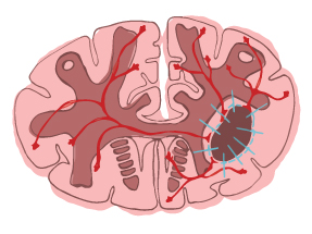 brain illustration 3
