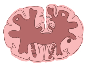 brain illustration 6