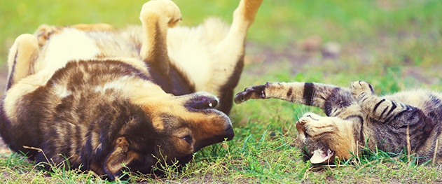 dog and cat play in the grass