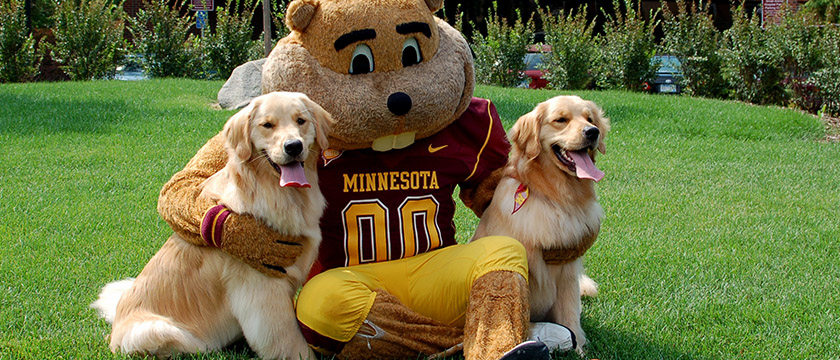 Goldy Gopher with Goldens