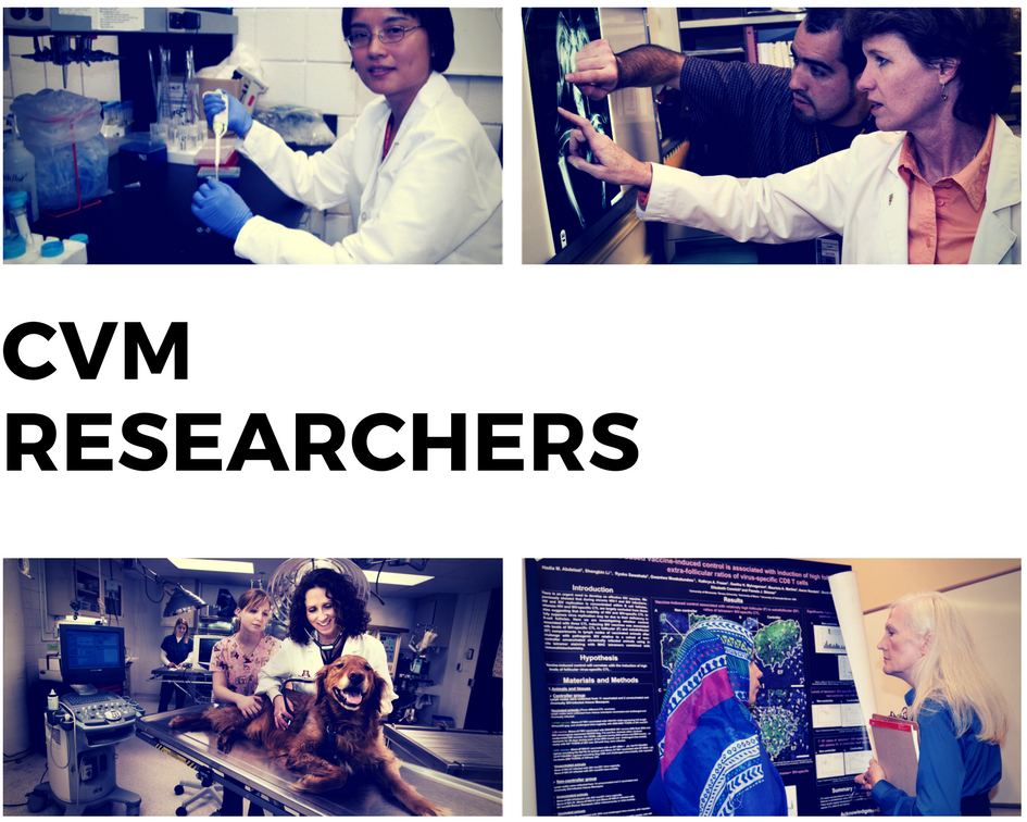 Link to CVM Researchers