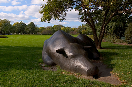 Bull statue on the St. Paul campus