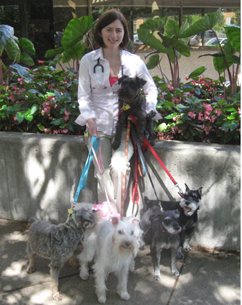 Dr. Furrow and Schnauzers