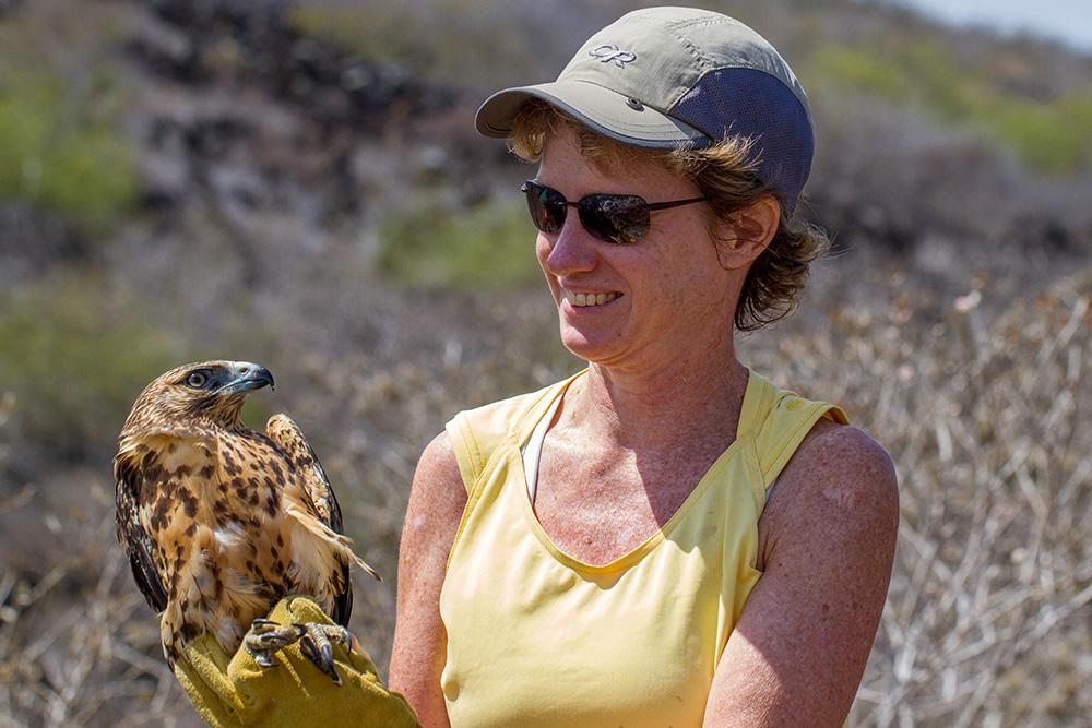 Dr. Julia Ponder holds a Galapagos hawk in the Galapagos Islands. Ponder and The Raptor Center worked with conservationists there to protect the hawks during a project to eradicate invasive species on the islands.