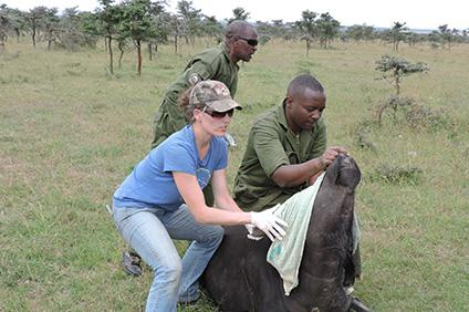 Kim VanderWaal, researcher at the UMN Department of Veterinary Population Medicine and Kenya Wildlife Service staff with an African buffalo at Ol Pejeta Conservancy in Laikipia, Kenya.