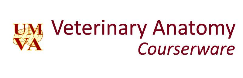 Link to Veterinary Anatomy Website