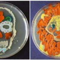 VBS 2032 Agar ASM Art Contest, Sugar Skull and Lion